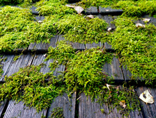 Roof Cleaning Company Vancouver Wa Northwest Roof