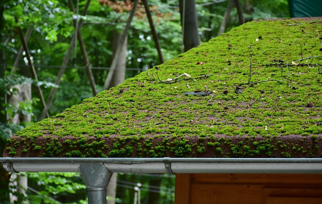 Roof Moss Removal Vancouver Wa Northwest Roof Maintenance