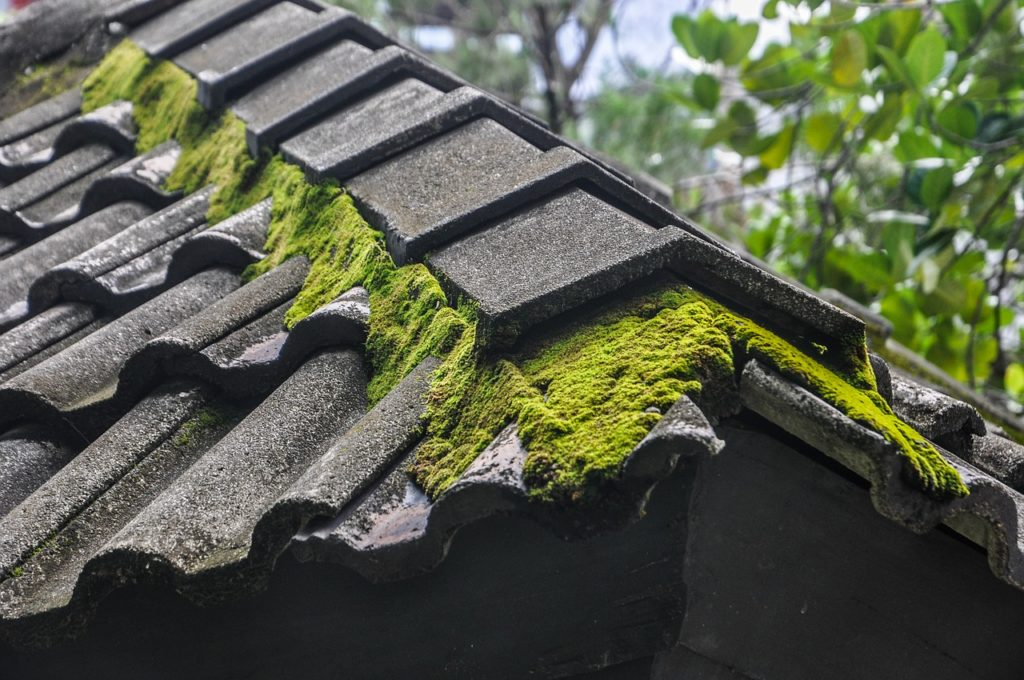 A roof with moss on it.