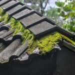 Removing Moss from Tile Roof